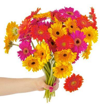 40 bunte Germini Blumen für 18,94€