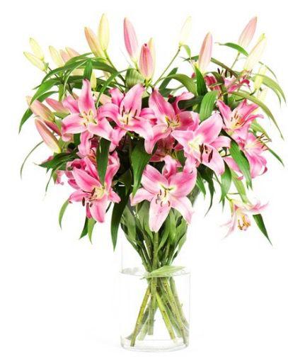 12 langstielige pinke Lilien für 17,94€