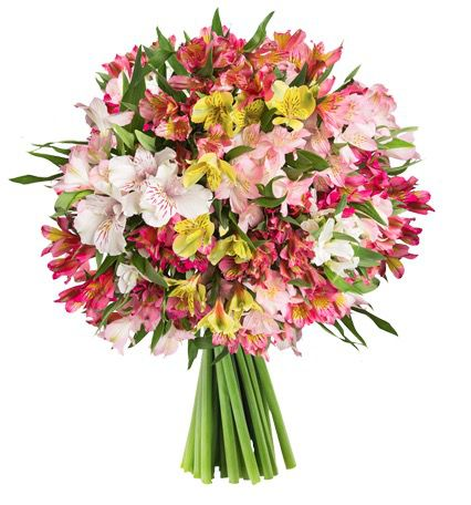 22 Inkalilien mit bis zu 120 Blüten für 20,94€
