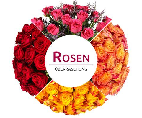 Miflora Überraschungs Rosen Blumenstrauß für 16,90€