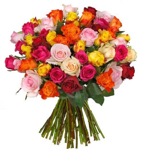 Bildschirmfoto 2016 10 24 um 08.23.42 44 bunte Rosen mit 50cm Länge für 23,94€