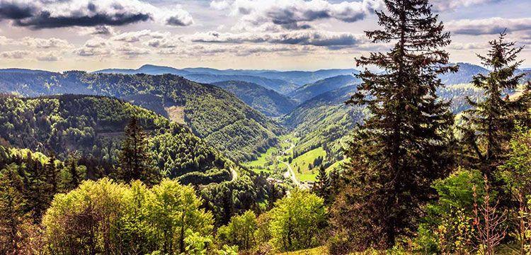 2 ÜN im Schwarzwald inkl. Halbpension & Wellness (Kind bis 5 kostenlos) ab 89€ p.P.