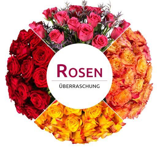 Bildschirmfoto 2016 10 20 um 10.49.47 28 Rosen in Überraschungsfarbe für 18,90€