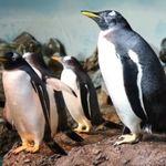 2 Tageskarten für Erwachsene für den Zoo Frankfurt für 11€ (statt 20€)