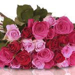 Pretty Pink Rosenstrauß aus 26 pinken-roten Rosen für 18,90€