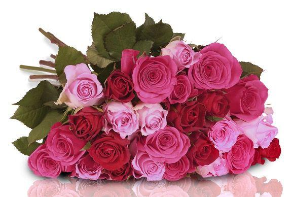 Pretty Pink Rosenstrauß aus 26 pinken roten Rosen für 18,90€