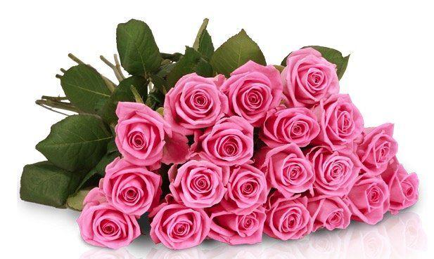 Rosen Rallye: 25 Pretty Pink Rosen für 18,90€