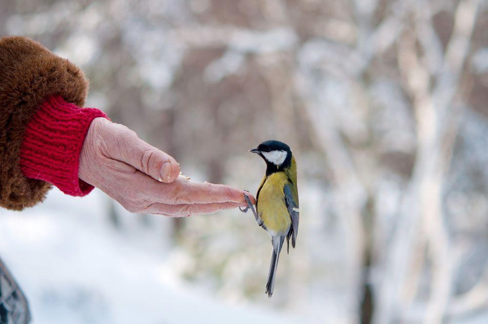 Vögel füttern im Winter – Das günstigste Vogelfutter