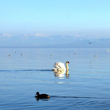 bodensee-th