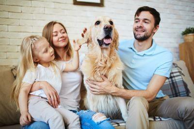 Familie mit Hund Tierfutter günstig online kaufen – Der große Schnäppchen Guide