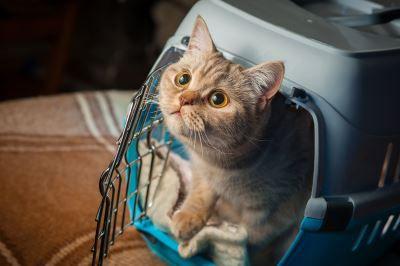 Hauskatze Tierfutter günstig online kaufen – Der große Schnäppchen Guide