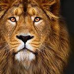 Towell Sporthandtuch für 19,99€ aus der Höhle der Löwen