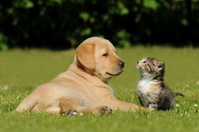 Welpe und Kätzchen Tierfutter günstig online kaufen – Der große Schnäppchen Guide