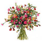 44 Spray-Nelken mit bis zu 200 Blüten für 20,94€