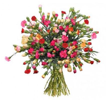 Bildschirmfoto 2017 01 16 um 09.28.21 44 Spray Nelken mit bis zu 200 Blüten für 20,94€