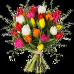 """20 bunte Tulpen – """"Modern Love"""" für 14,99€"""