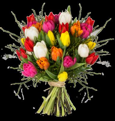 tulpen bunt heidelbeeren1 ready e1485277373557 20 bunte Tulpen   Modern Love für 14,99€