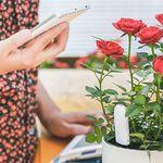 Xiaomi Mi Pflanzensensor mit App-Bedienung für 10,69€