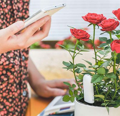 Xiaomi Mi Pflanzensensor mit App Bedienung für 13,12€