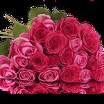 20 rosa-pinke Rosen in 50cm Länge für 19,90€