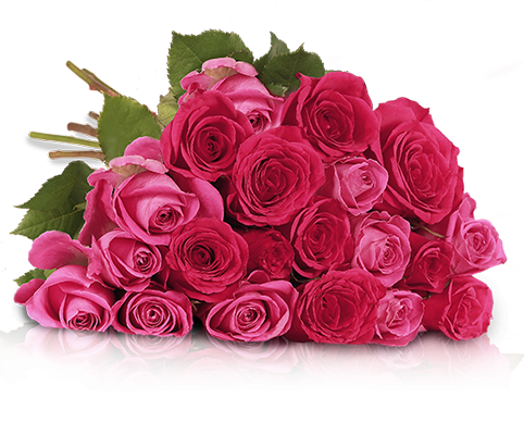 20 rosa pinke Rosen in 50cm Länge für 19,90€