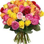 44 bunte Rosen mit 50cm Länge für 24,94€