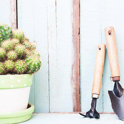 Frühjahrsputz fürs Auto und den Garten: Das geht auch günstig