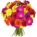 33 bunte Gerbera Blumen für 20,94€