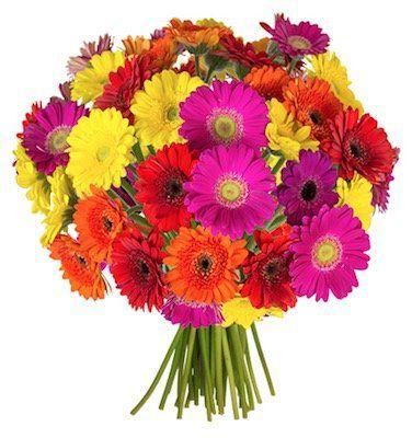 41 bunte Gerbera Blumen für 22,98€