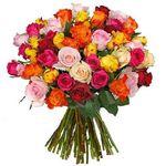 Rosenrausch mit bis  zu 43 bunte Rosen für 23,94€