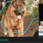 3kg Purina Pro Plan Optidigest Hundefutter gratis testen dank Geld zurück Garantie