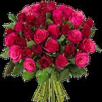 36 rote + pinke Rosen mit 50cm Länge für 24,94€