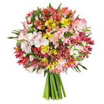 33 Inkalilien (150 Blüten) für 21,94€