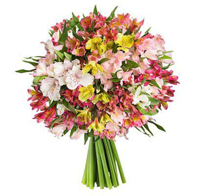 40 Inkalilien (200 Blüten) für 23€ inkl. VSK