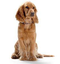 Hunter Sale mit günstigen Zubehör für Katze, Hund & Co.   z.B. Hundesofa Niblum ab 40€