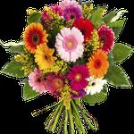 Blumenstrauß Chic – verschiedene Gerberas für 24,90€