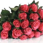 Miflora – Lovely Pink – 20 pinke Rosen für 18,90€