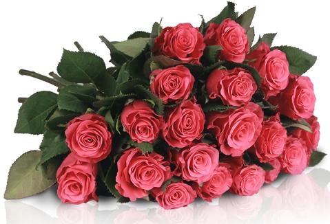 Miflora   Lovely Pink   20 pinke Rosen für 18,90€