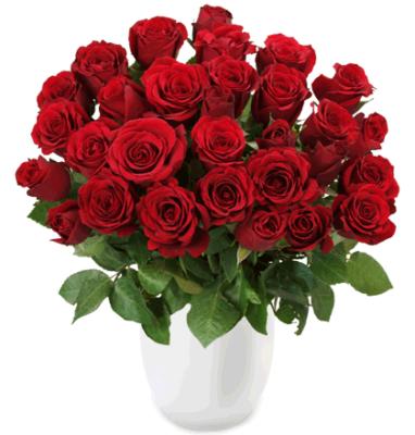 Update! Rosenrausch   33 Rosen Red Edition für 20,94€