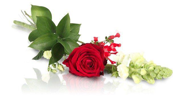 Lovely Red Blumengruss mit roter Rose für 12,90€