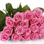 20 Lovely Pink Rosen für 18,90€