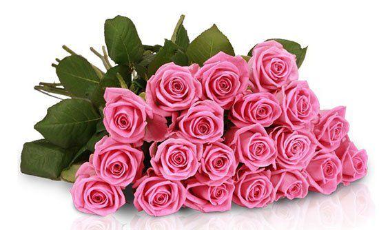 20 Lovely Pink Rosen für 17,90€