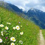 2   4 ÜN in Tirol inkl. Halbpension, Weinflasche, Willkommensgetränk, geführte Wanderung & Wellness ab 79€ p.P.