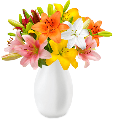 17 Lilien mit bis zu 60 Blüten für 19,98€