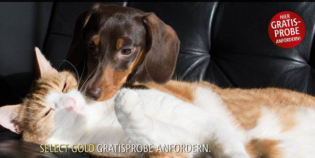 Select Gold Hundefutter Gratisprobe anfordern