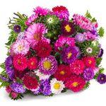 33 Sommerastern mit über 100 Blüten für 21,94€