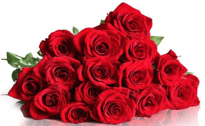 BlumeIdeal: 20 Red Naomi Rosen mit XXL Blumenköpfen für 19,98€
