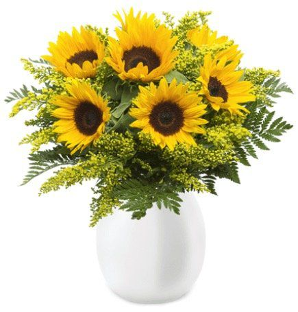 XXL Sonnenblumen Strauß mit max. 60cm Länge für 21,98€