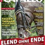 2 Ausgaben Cavallo gratis testen – Kündigung notwendig