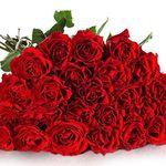 Ziel erreicht! Miflora Rosen-Rallye mit 30 roten Rosen für 19,90€